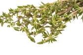 Fresh thyme branch — Stock Photo