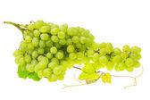 Green bright grape — Stock Photo