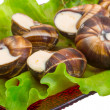 Foto de Stock  : Escargot