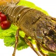 Stock Photo: Raw spiny lobsters
