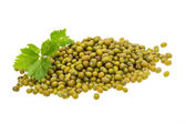 Green bean isolated — Stock Photo