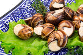 Escargot — Stock Photo