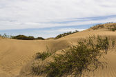 Maspalomas Duna - Desert in Canary island Gran Canaria — Stock Photo