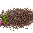 Black mustard seeds — Stock Photo