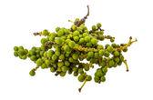 Green Kampot pepper — Stock Photo