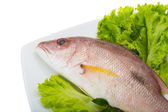 Raw red snapper — Stock Photo