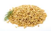 Wheat grains — Stock Photo