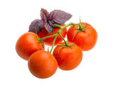 Tomatoes on the branch — Stock Photo