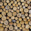 Pile of dry wood — Stock Photo