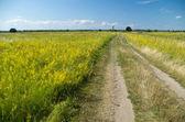 Strada di campagna, nei prati — Foto Stock