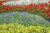 Blühenden blumen — Stockfoto
