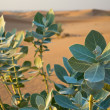 Arabian desert — Stock Photo