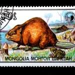 European Beaver — Stock Photo #13466644