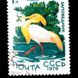 Stock Photo: Cattle Egret - Bubulcus ibis