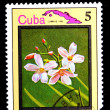 Flower Cuba — Stock Photo