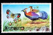 Kelebek ve kuş — Stok fotoğraf