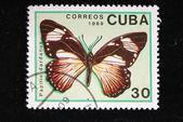 Papilio dardanus — Stock Photo