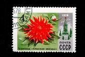 Flower Dahlia — Stock Photo
