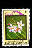 Flower Cuba — 图库照片