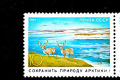 USSR - CIRCA 1989: A stamp printed in the USSR shows deer, circa 1989 — Stock Photo