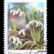 Snowdrops — Stock Photo #13508110