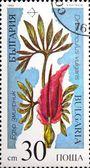 Flowers of east europas Draounculus vulgaris — Stock Photo