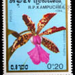Kampuchea shows cattleya aclandiae - Zdjcie stockowe