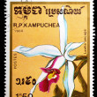Kampuchea shows laelia anceps - Zdjcie stockowe