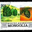 Mongolia shows image of the tree Pinus silvestris - Stock Photo