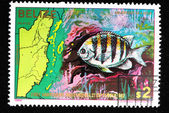 Belize shows fish — Stock Photo