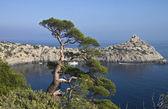 Pine over the sea. — Stock Photo
