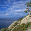 Stock Photo: Pine on cliff above sea.