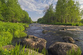 Landscape with small rapids. — Stock Photo