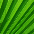 Green palm tree leaf background — Stock Photo