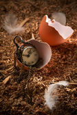 Small vintage clock in broken egg — Stock Photo