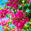 Purple blossom flowers over blue sky — Stock Photo