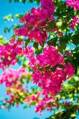 фиолетовый цветок цветы над голубое небо — Стоковое фото