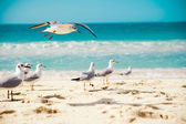 Seagulls are flying — Stock Photo
