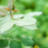 čerstvé a zelené listy — Stock fotografie
