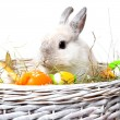 Stock Photo: Rabbit in a basket