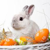 white rabbit in a basket — Stock Photo