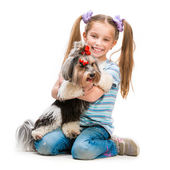 Little girl is with her dog Yorkshire Terrier — Stock Photo
