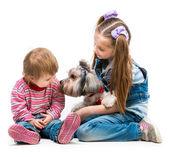 犬ヨークシャー テリアと妹 — ストック写真