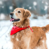Beautiful dog outdoors — Stock Photo