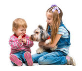 Sisters with Yorkshire Terrier dog — Stock Photo