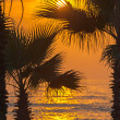 Palm silhouettes against sea sunset — Stock Photo