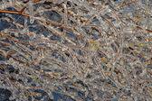 氷で凍結の木の枝 — ストック写真