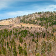 Hills and forest at early spring — Stock Photo