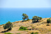 Typical cyprus nature landscape — Stock Photo