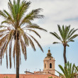 Belltower and palms — Stock Photo